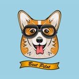 Rétro aviateur Glasses de pilote de voyageur mignon de Corgi Dog Face Le meilleur pilote Ribbon Illustration de vecteur sur le bl Photo libre de droits