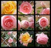 Rétro beau de cadre floral s'est levé dans le style décoratif de vintage de cadre Images libres de droits