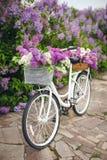 Rétro bicyclette blanche avec le panier des fleurs Images libres de droits
