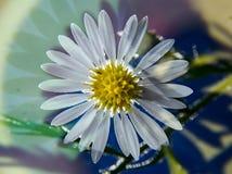 Rétro blanc de paix et d'amour avec la fleur sauvage centrale jaune Photo stock