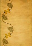 Rétro cadre jaune de fleur Images stock
