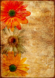 Rétro carte florale Image stock