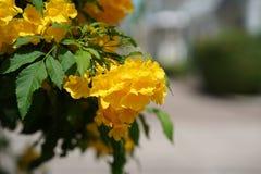 Rétro fleur jaune image stock