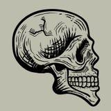 Rétro illustration de crâne photos libres de droits