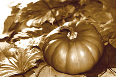 Rétro image de thanksgiving avec le potiron et les feuilles d'automne Images stock