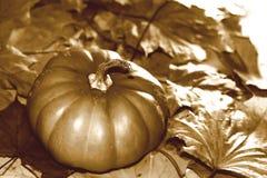Rétro image de thanksgiving avec le potiron et les feuilles d'automne Image libre de droits