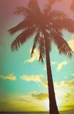 Rétro palmier hawaïen dénommé illustration de vecteur