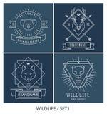 Rétro paquet à la mode d'insignes de vintage animaux Images stock