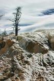 Rétro petit groupe de Mammoth Hot Springs de regard Photo stock