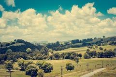 Rétro photo de style d'un paysage de pays avec un troupeau de vaches frôlant dans un pâturage sur un afternooon ensoleillé d' image libre de droits