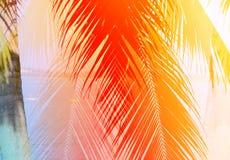 Rétro photo des palmiers Image stock