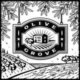 Rétro plantation olive noire et blanche Photographie stock libre de droits