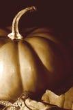 Rétro potiron de thanksgiving Photo stock