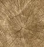 Rétro tonalité de coupe de fond en bois en gros plan de texture Photos libres de droits