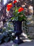 Rétro vase décoratif noir avec les fleurs rouges sur des seuils de maison Photos libres de droits