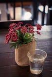 Rétros fleurs en verre Image libre de droits