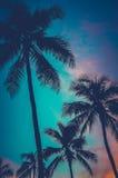 Rétros palmiers d'Hawaï de coucher du soleil Photos libres de droits