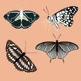 Rétros papillons de couleurs d'isolement sur le fond Joli papillon de vecteur réglé avec la palette de vintage Photo libre de droits