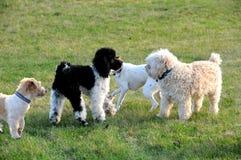 Réunion de chien Photo libre de droits