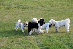 Réunion de chien Photographie stock libre de droits