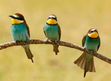 Réunion de trois oiseaux sur une branche Photographie stock libre de droits