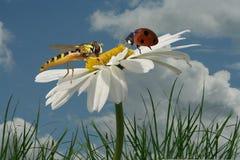 Réunion des insectes Photographie stock libre de droits