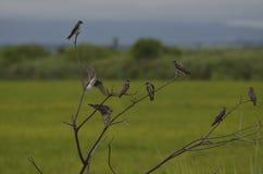 Réunion des oiseaux Images stock