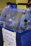 Réunion marine d'aquarium Photographie stock libre de droits