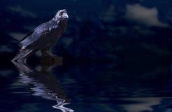 Réunion nocturne Images libres de droits