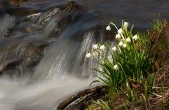 Réveil au printemps Photographie stock libre de droits