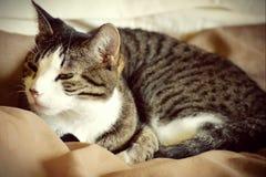 Réveil de chat image libre de droits