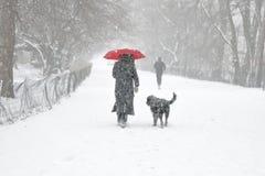 Réveil du chien dans la tempête de neige photo libre de droits