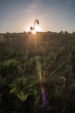 Réveil en steppe d'Ukrainien de matin Image stock