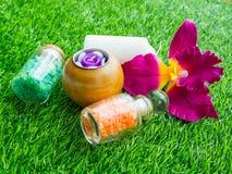 Réveil sur la pelouse verte photo libre de droits