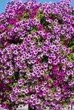 Réverbère avec les paniers accrochants colorés de fleur de pétunia Photographie stock