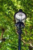 Réverbère de vintage devant un arbre historique image stock
