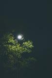 Réverbère et arbre Image stock