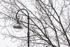 Réverbère et branches d'arbre Photos libres de droits