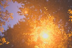 Réverbère rougeoyant parmi les feuilles d'un arbre photos stock