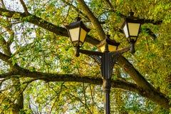 Réverbères sur le fond des branches d'arbre Photographie stock libre de droits