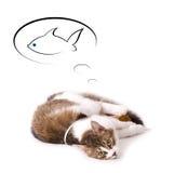 Rêve de chat au sujet des poissons Images libres de droits