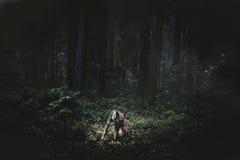 Rêve de forêt Photos libres de droits