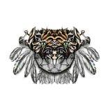 rêve Modèle de Tiger Feather de receveur Images stock