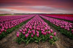 Rêve néerlandais photos libres de droits