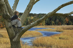 rêverie d'automne Photographie stock