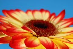 Rêverie de soleil Images libres de droits