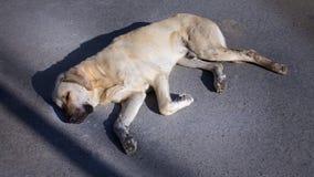 Rêves de chien images libres de droits