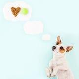 Rêves du ` s de chien Photos stock