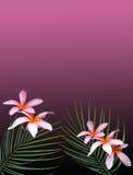 Rêves hawaïens Image libre de droits