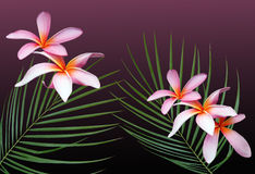 Rêves hawaïens Images stock